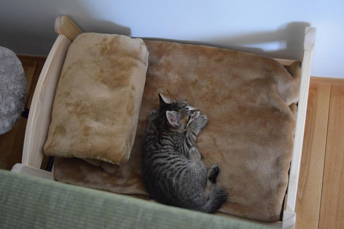 初めて猫ベッドで寝てみる虎ノ介