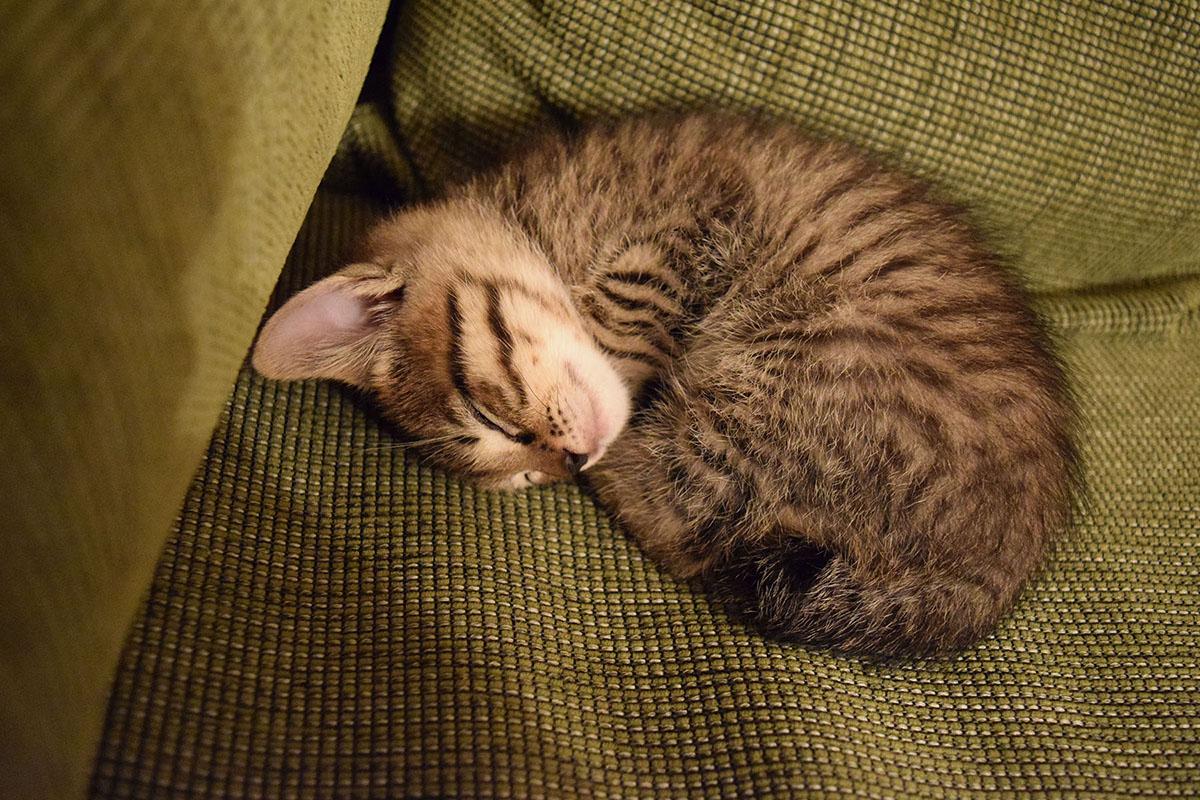 アンモナイト状態で丸くなって眠る虎ノ介