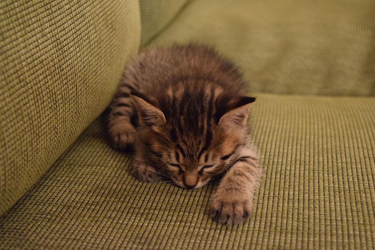 遊んでいる途中で力尽きて眠る虎ノ介