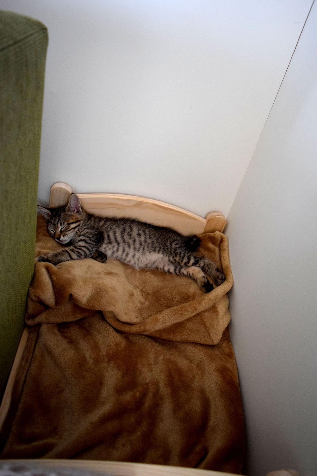 ベッドに横向きで寝る虎ノ介