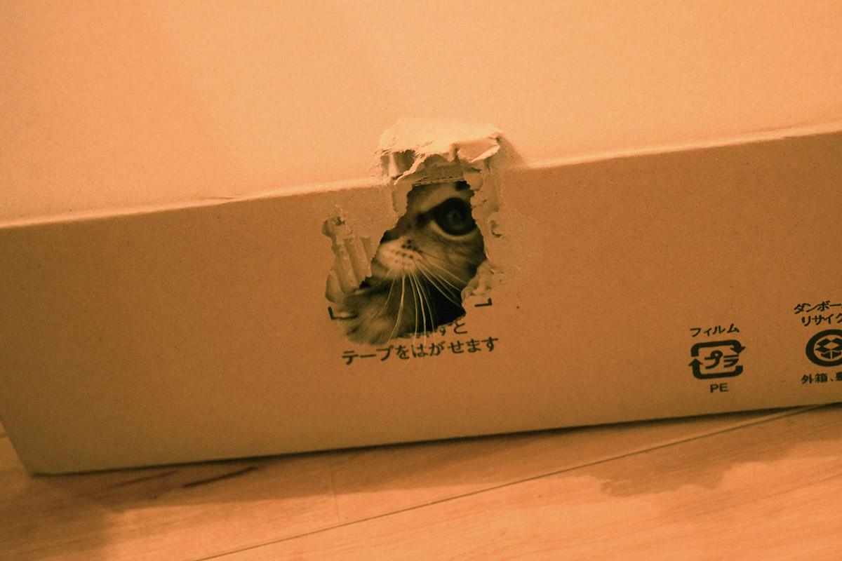 箱の中から外を覗く虎ノ介