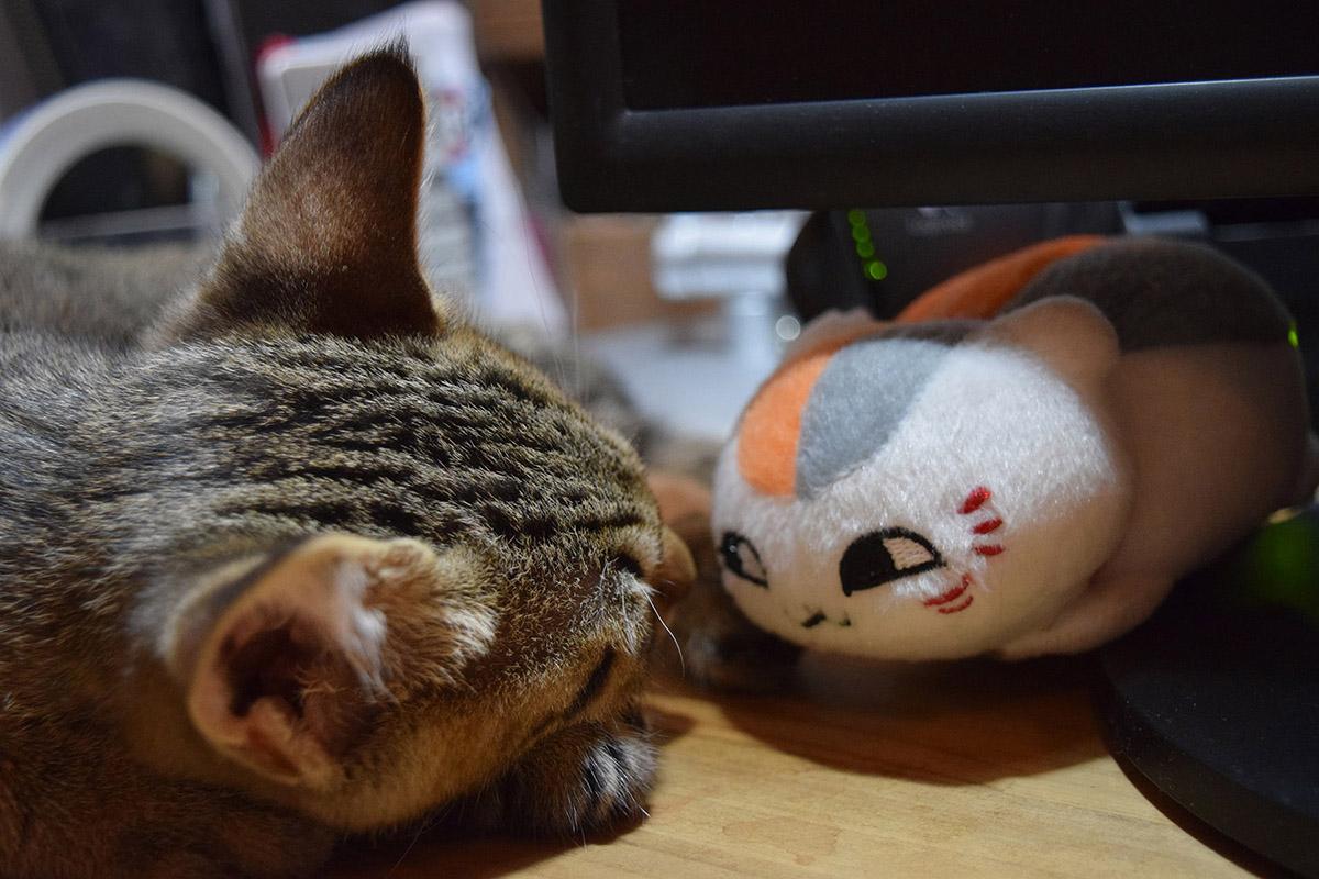 にゃんこ先生と眠る虎ノ介