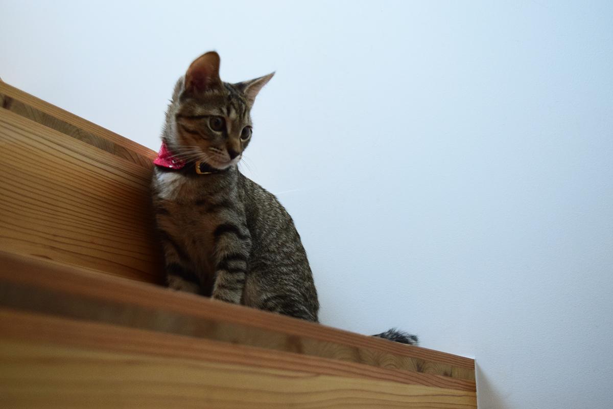 階段の1段よりも背が高くなった虎ノ介