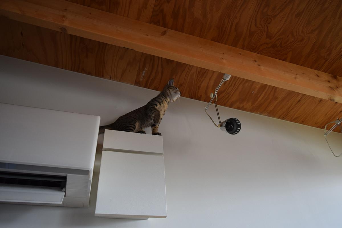 天井に近い場所にのぼった虎ノ介