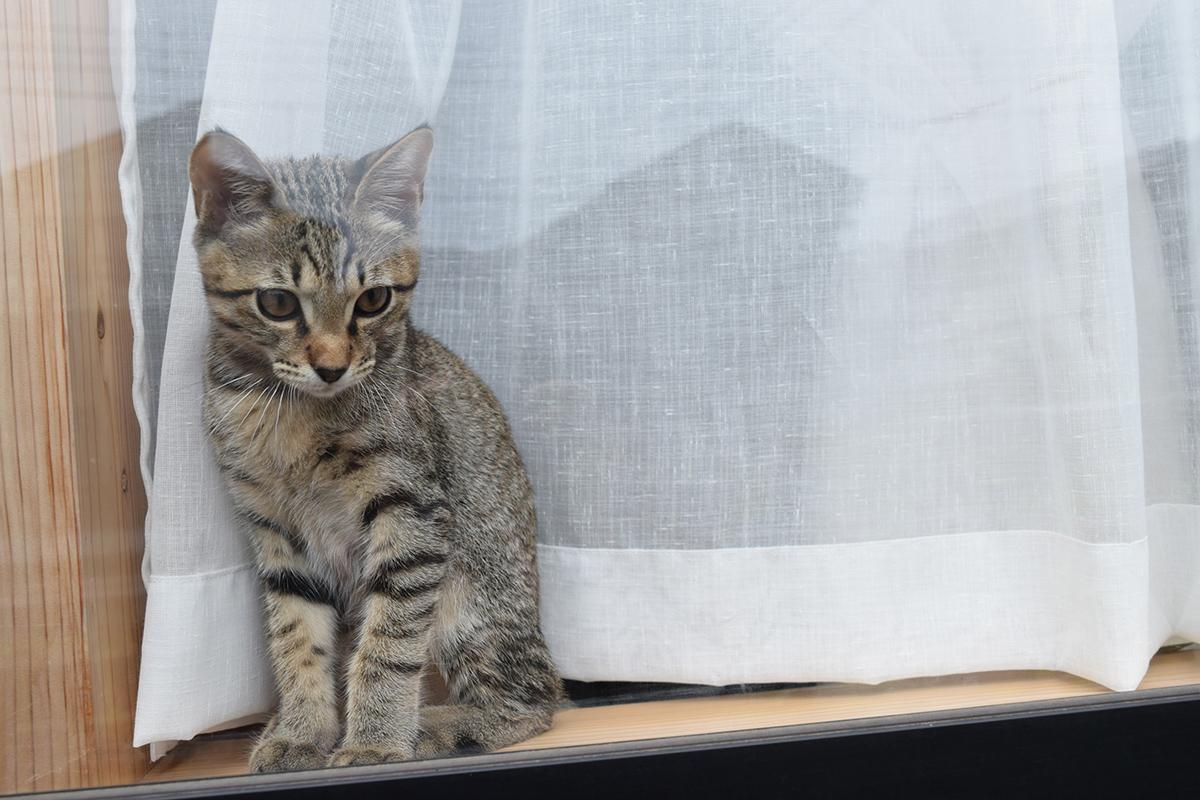 窓から外を眺める虎ノ介