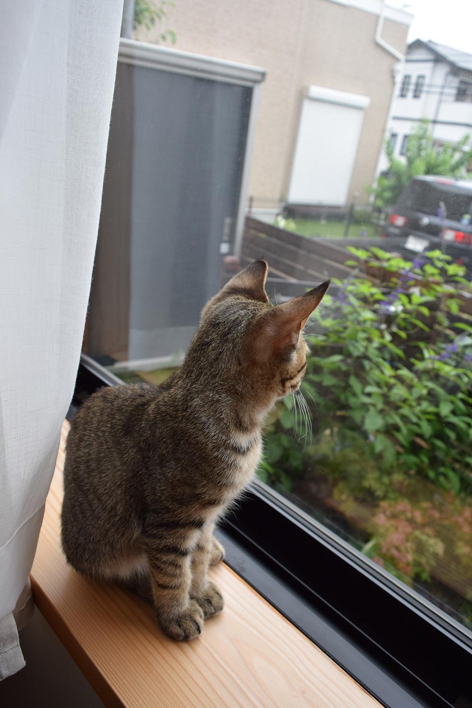 外が気になって窓から外を眺める虎ノ介