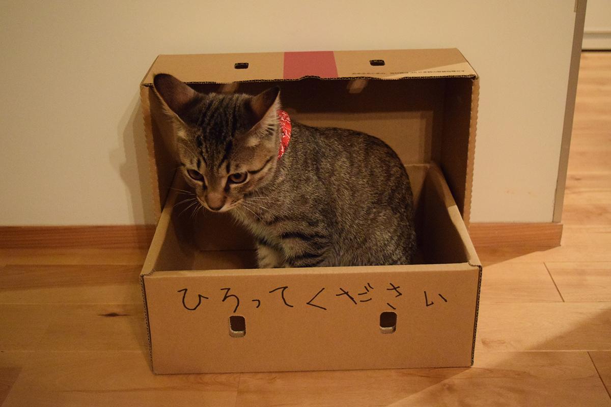 お気に入りの箱にひろってくださいと落書きされ捨て猫風になった虎ノ介