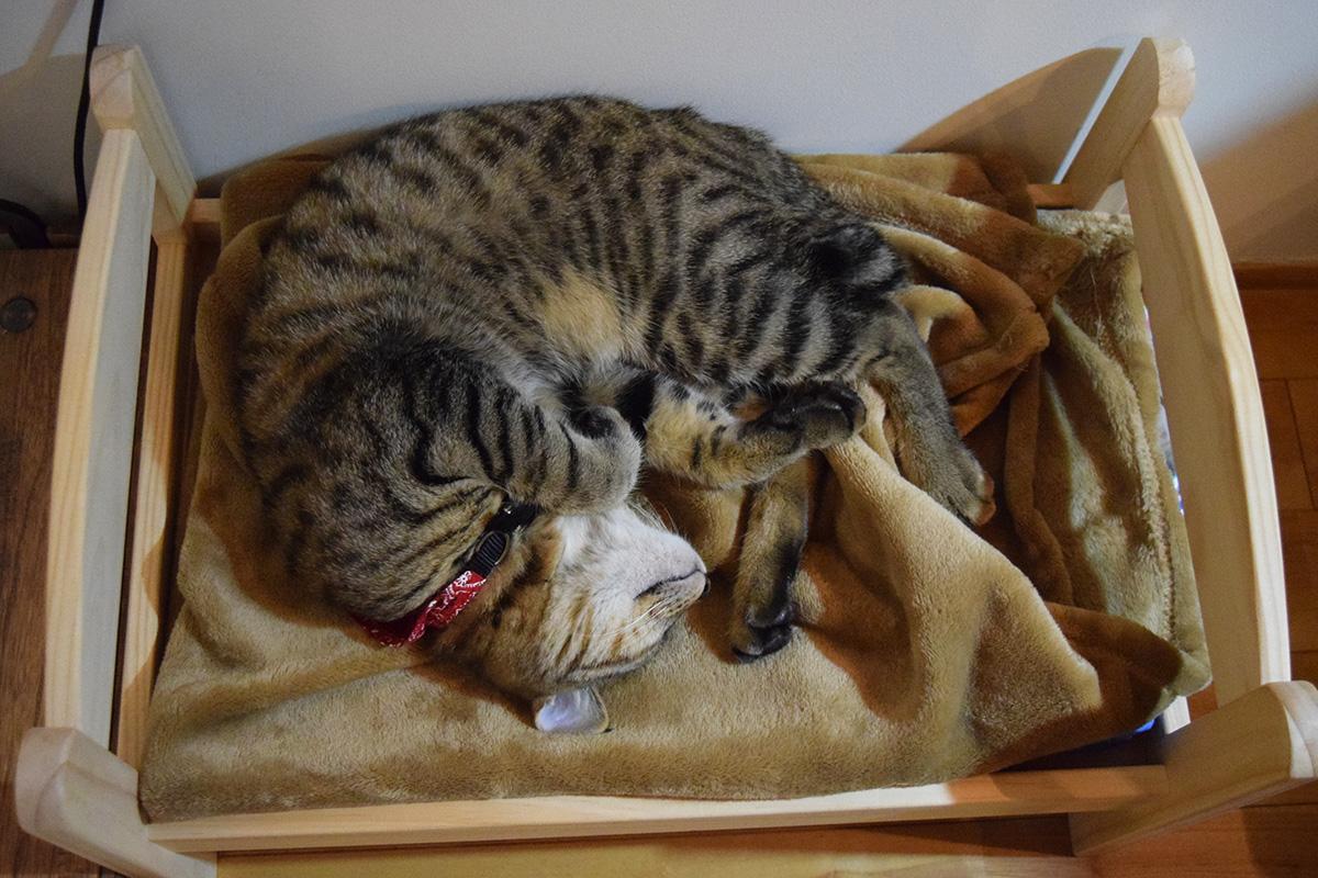 家の猫ベッドの上の寝相の悪い虎ノ介
