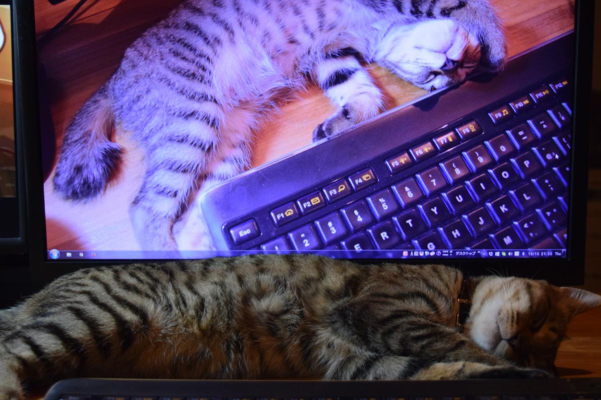 モニタに映る子供時代の寝相と比べてお行儀のよいモニタ前の虎ノ介