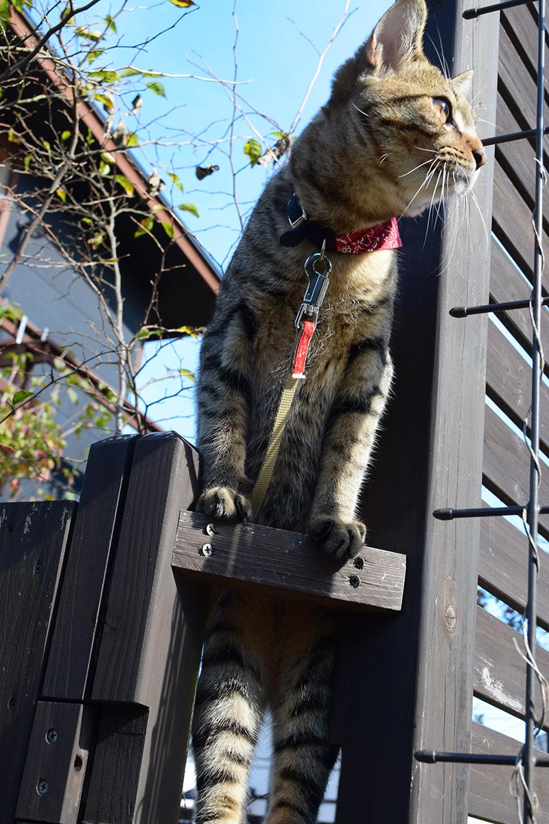 フェンスにのぼって向こうを確認する虎ノ介