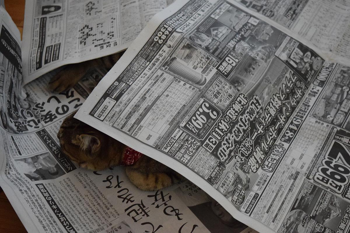 新聞の中でくつろぐ虎ノ介