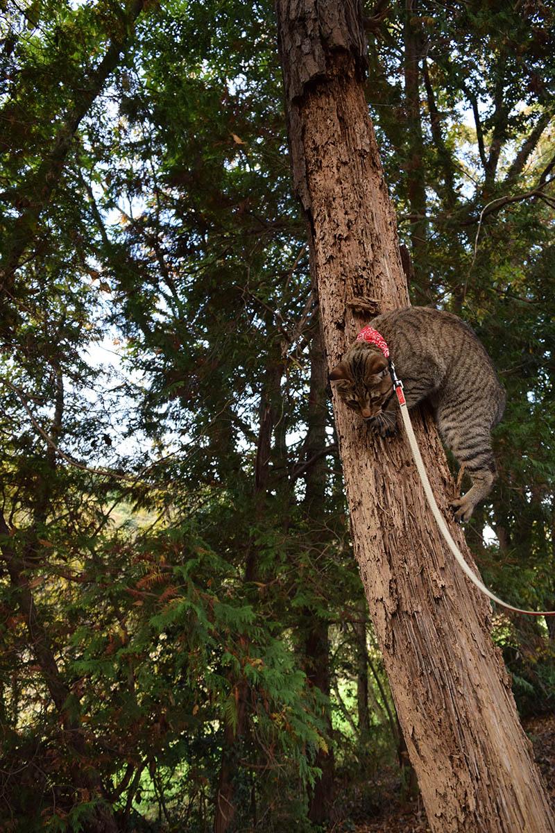 初めて木登りをした虎ノ介
