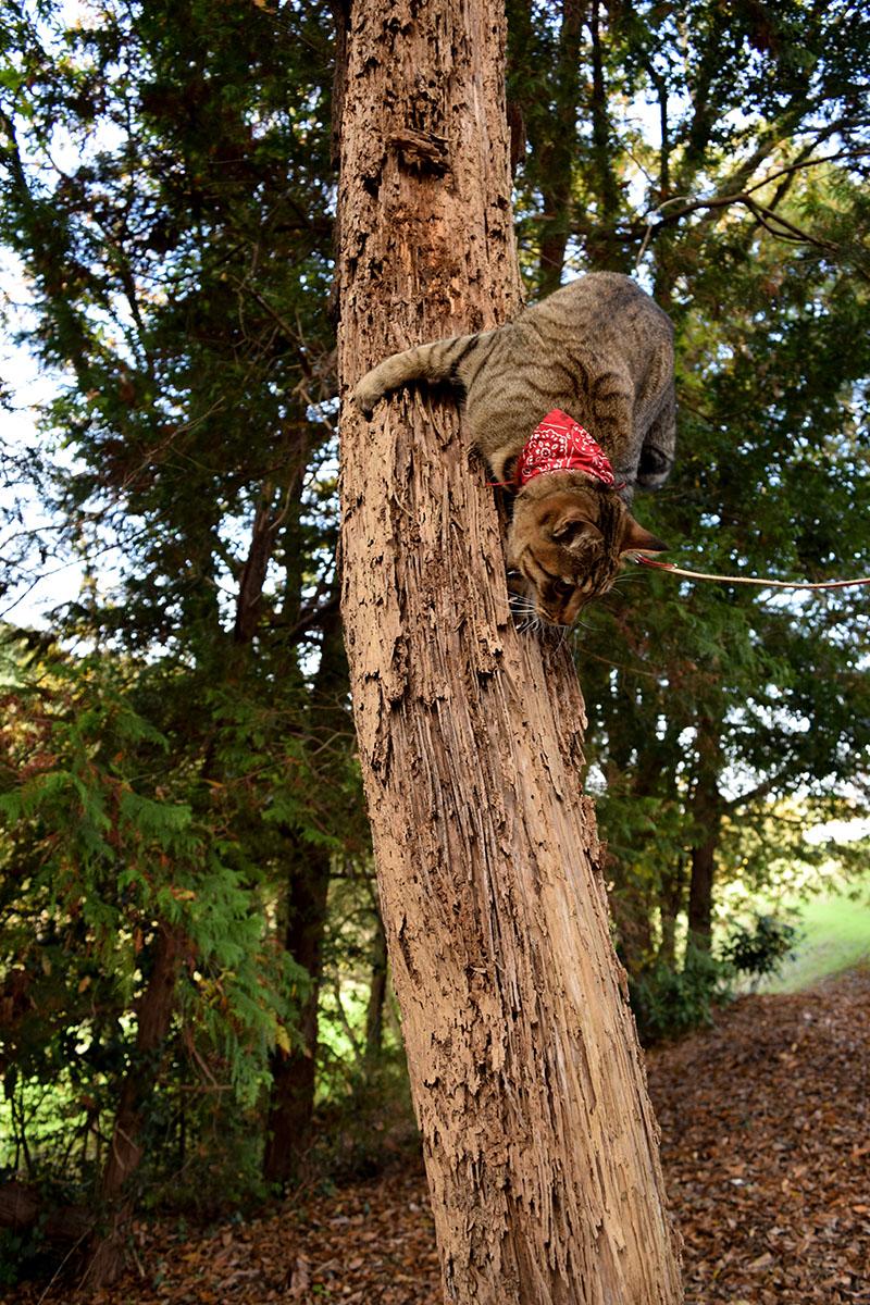 木から降りるようとさかさまになっている虎ノ介