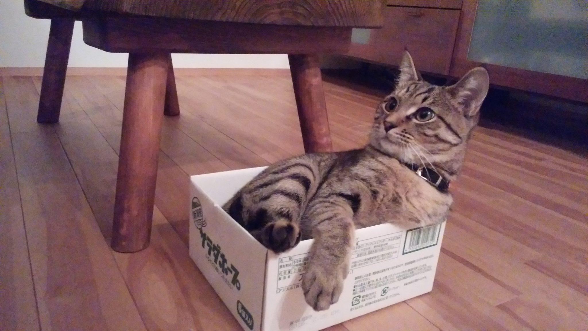 サラダホープの箱にないる虎ノ介