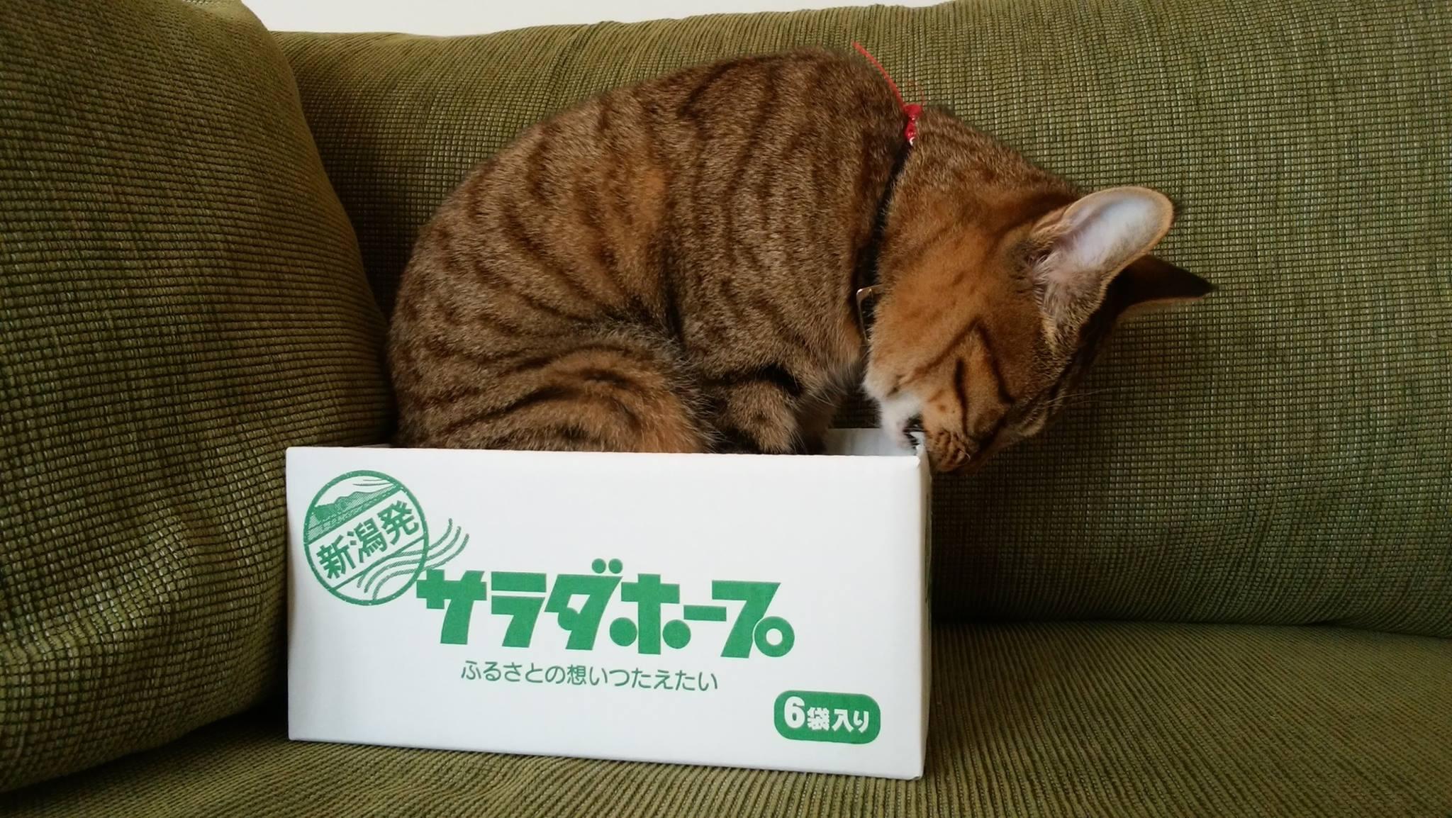 サラダホープの箱をかじってカスタマイズする虎ノ介