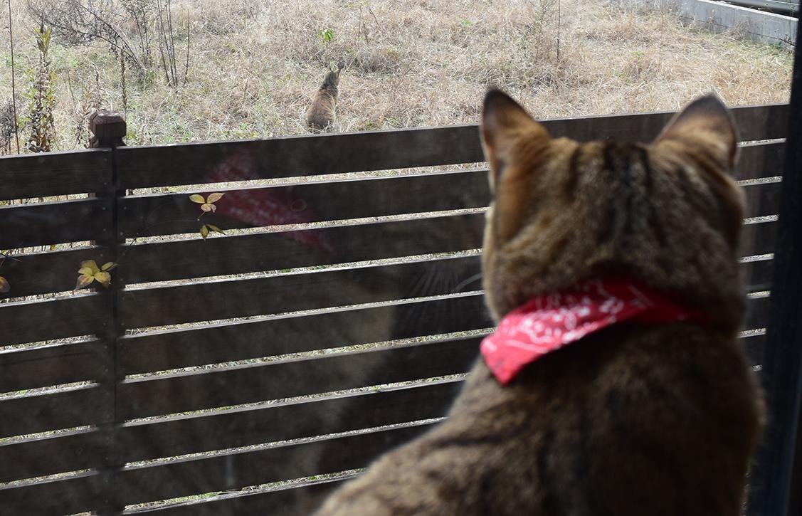 窓の外に自分とそっくりな猫をみつけた虎ノ介