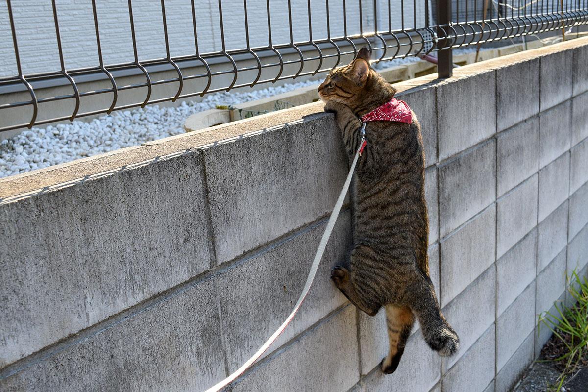フェンスの向こうを覗く虎ノ介