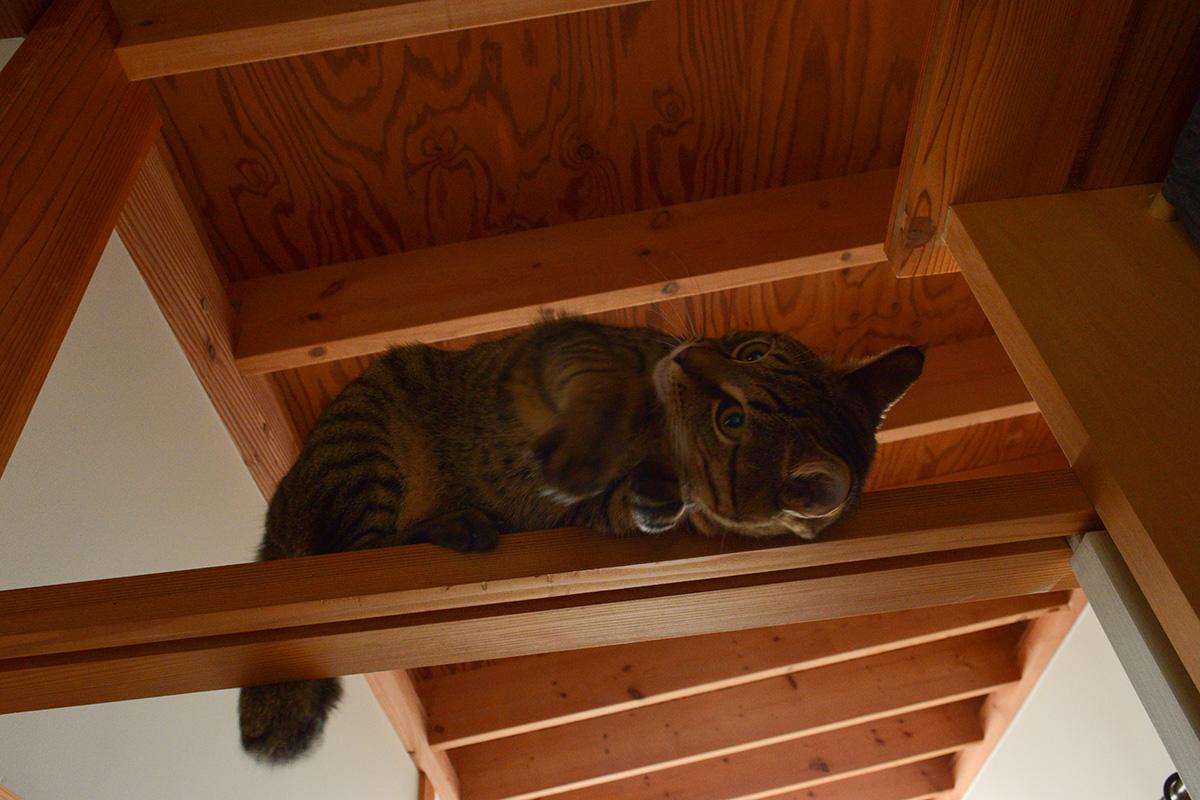 梁の上で遊ぶ虎ノ介