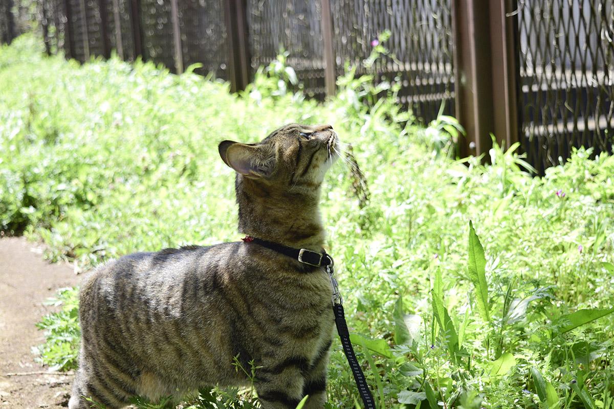 フェンスを見上げる虎ノ介