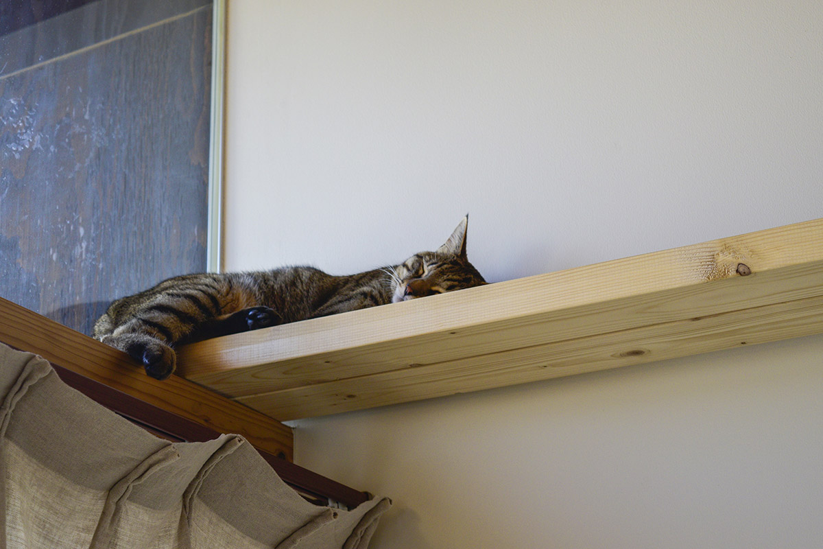 キャットウォークで眠る虎ノ介