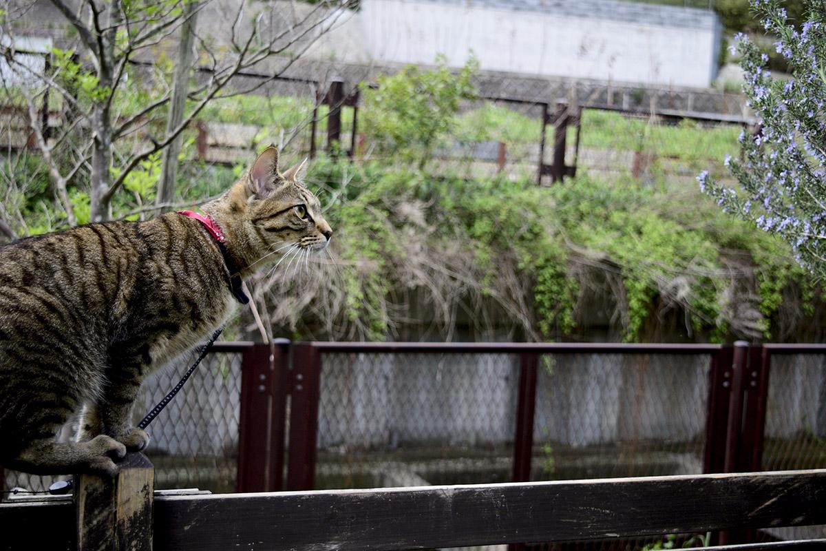 フェンスにのぼって鳥を狙う虎ノ介
