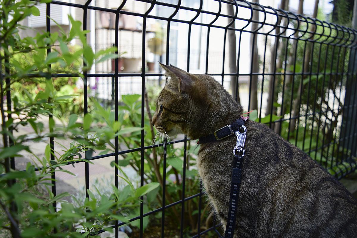 カナヘビが逃げたフェンスの向こうを見つめる虎ノ介