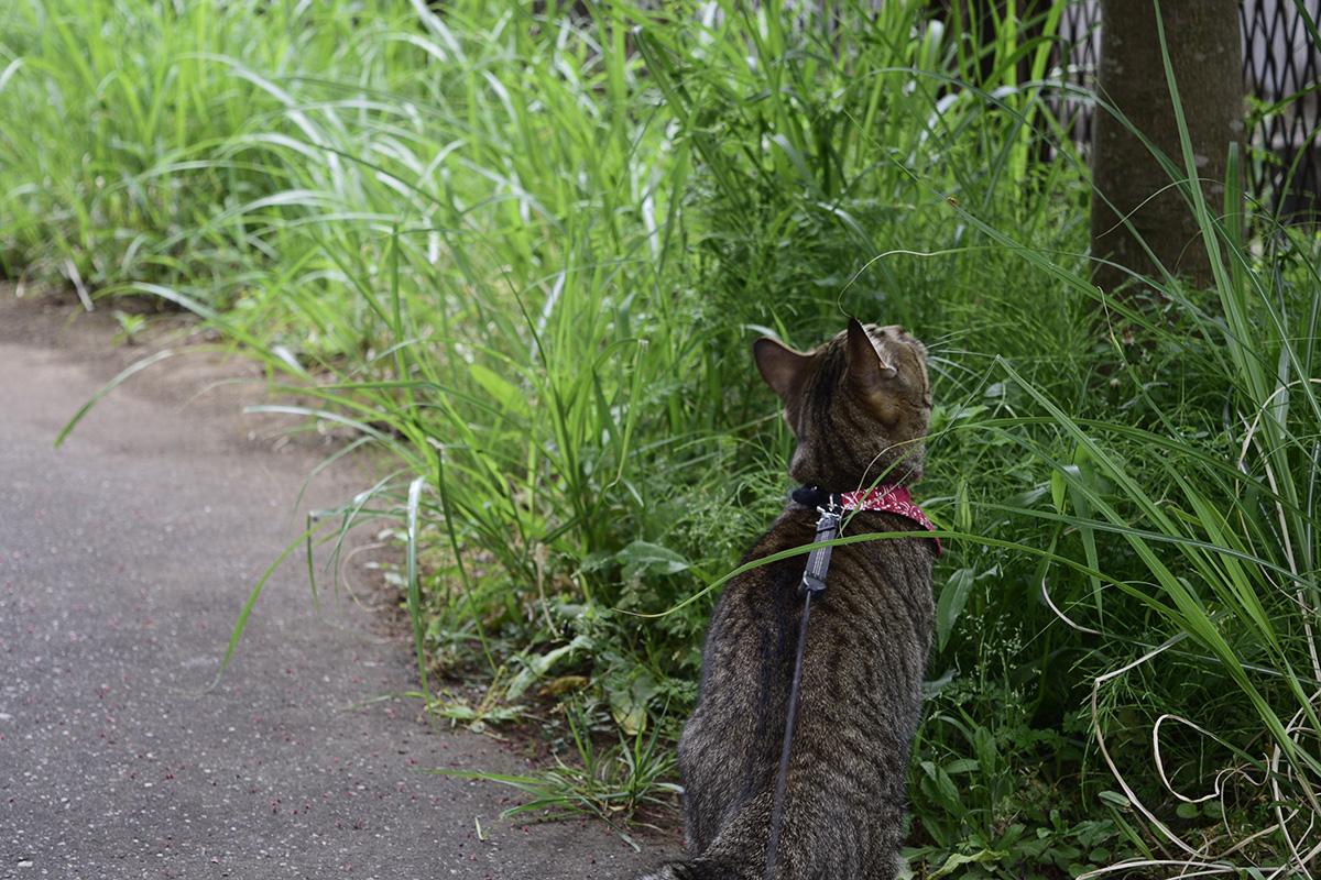 鳥を見つめる虎ノ介