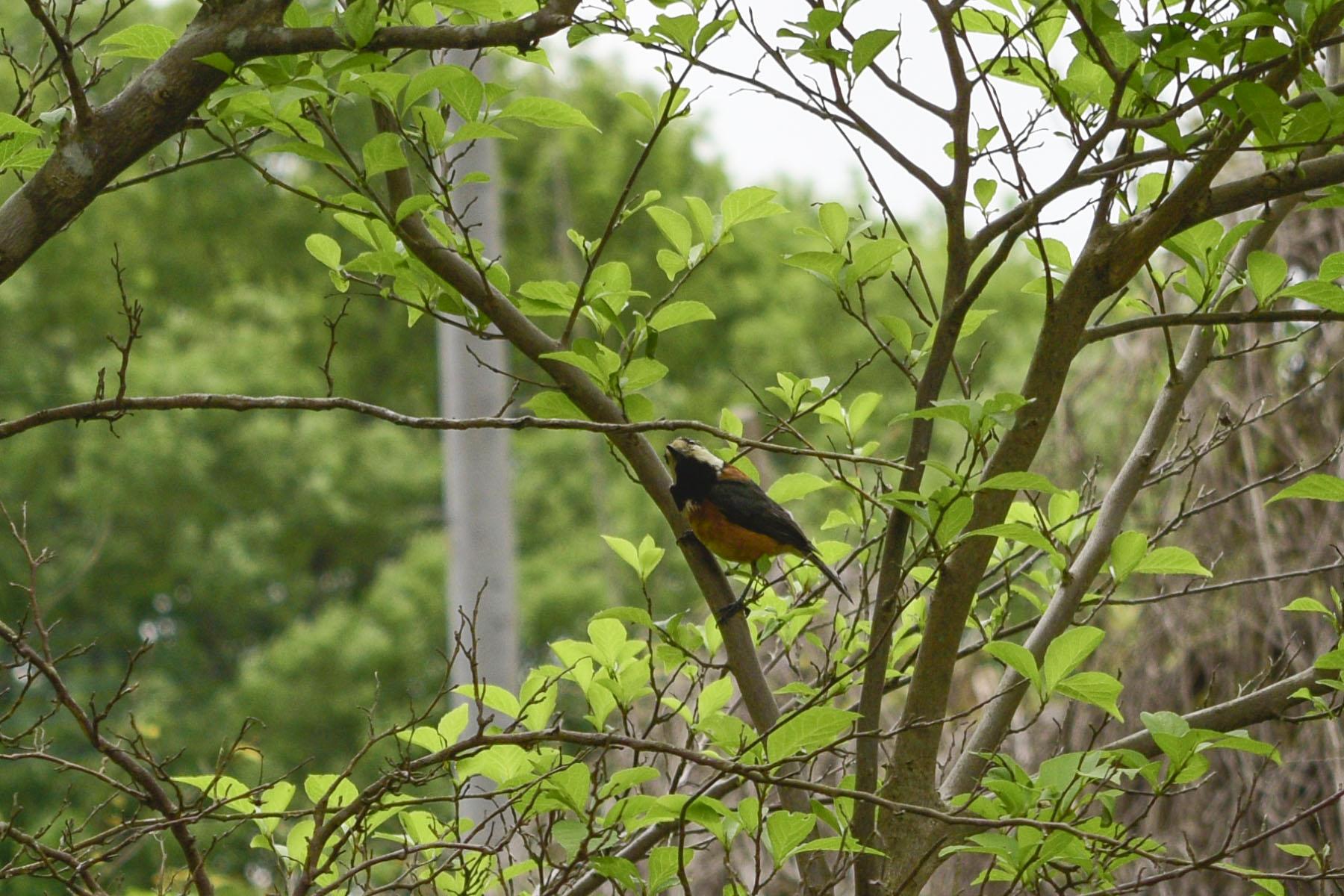 木の上にいる鳥