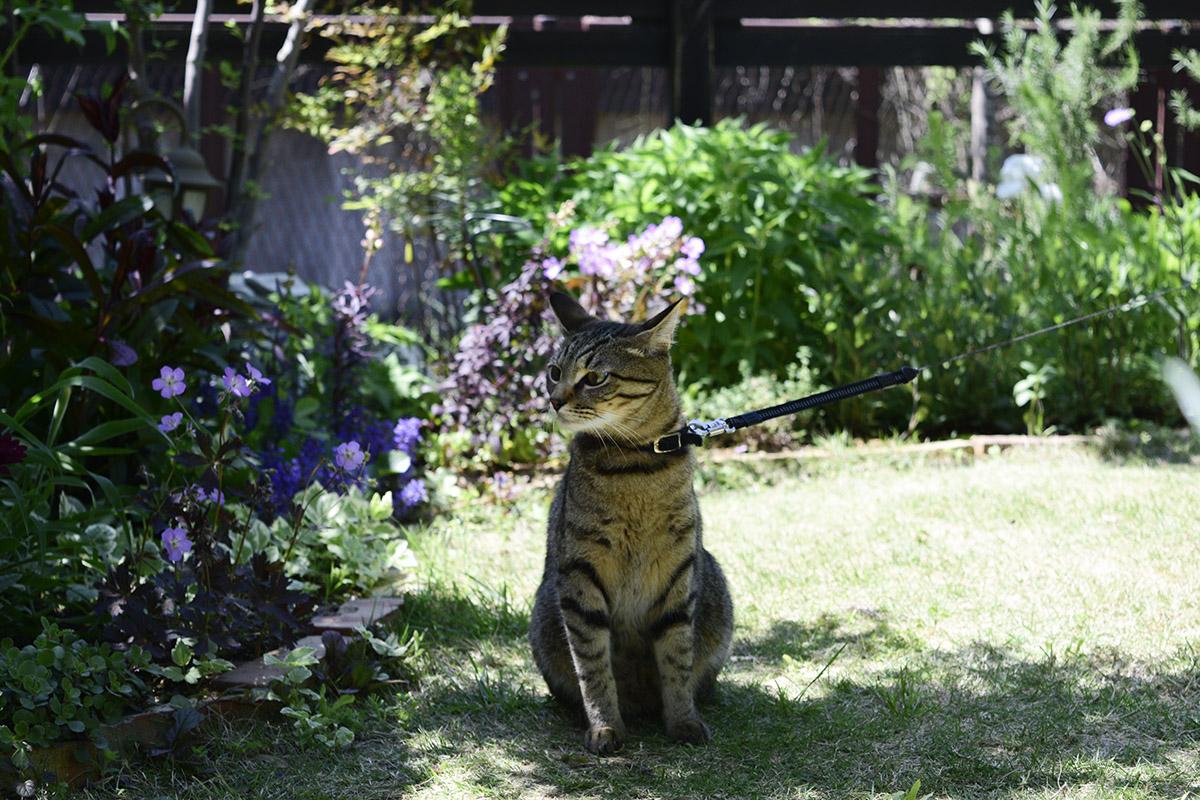 強風におびえるキジトラ猫の虎ノ介