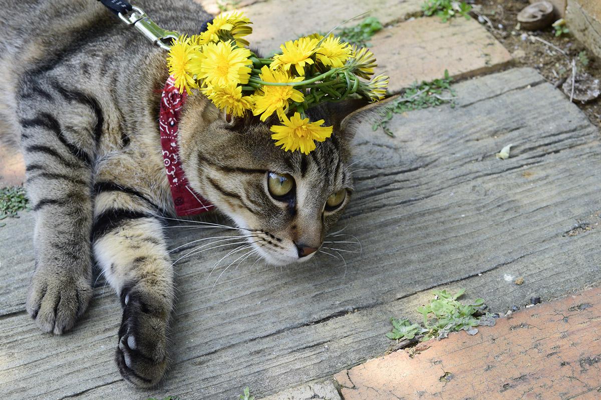 花冠をかぶった虎ノ介