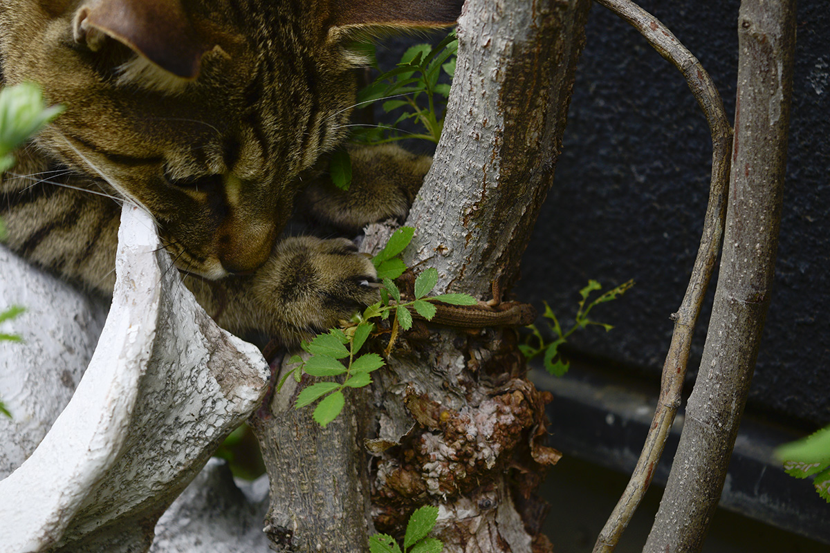 カナヘビを捕まえる虎ノ介