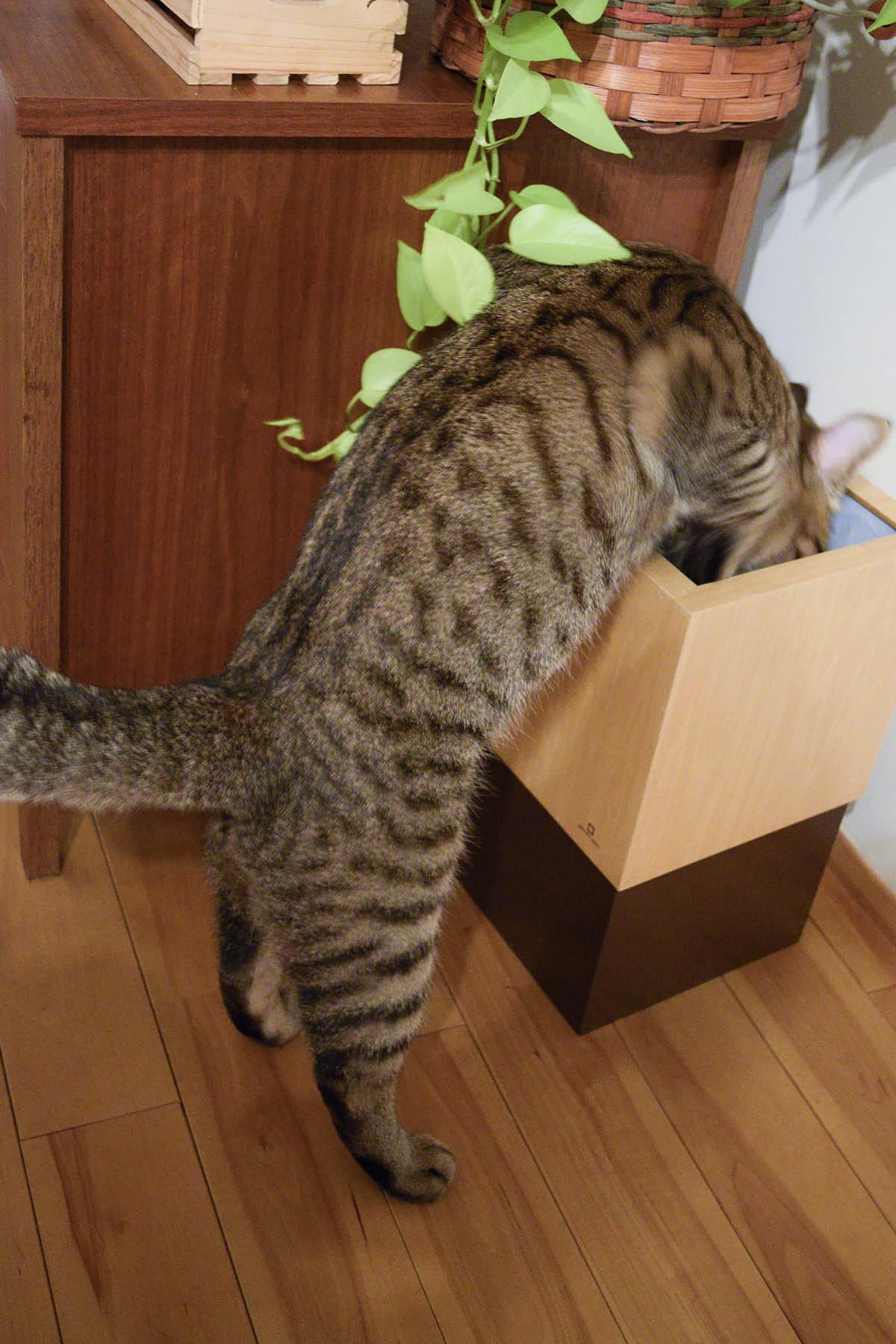 ゴミ箱をチェックする虎ノ介