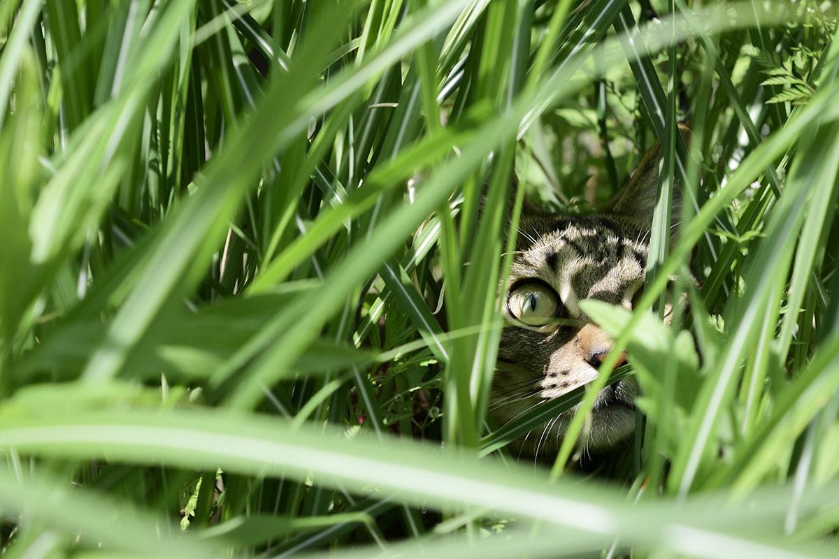草の中にいる虎ノ介