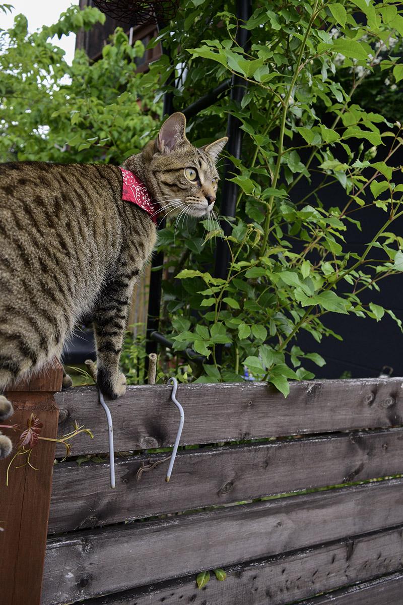フェンスの上に立つ虎ノ介