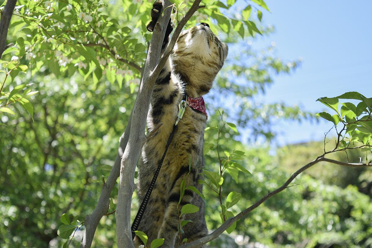 木に登ろうとする虎ノ介
