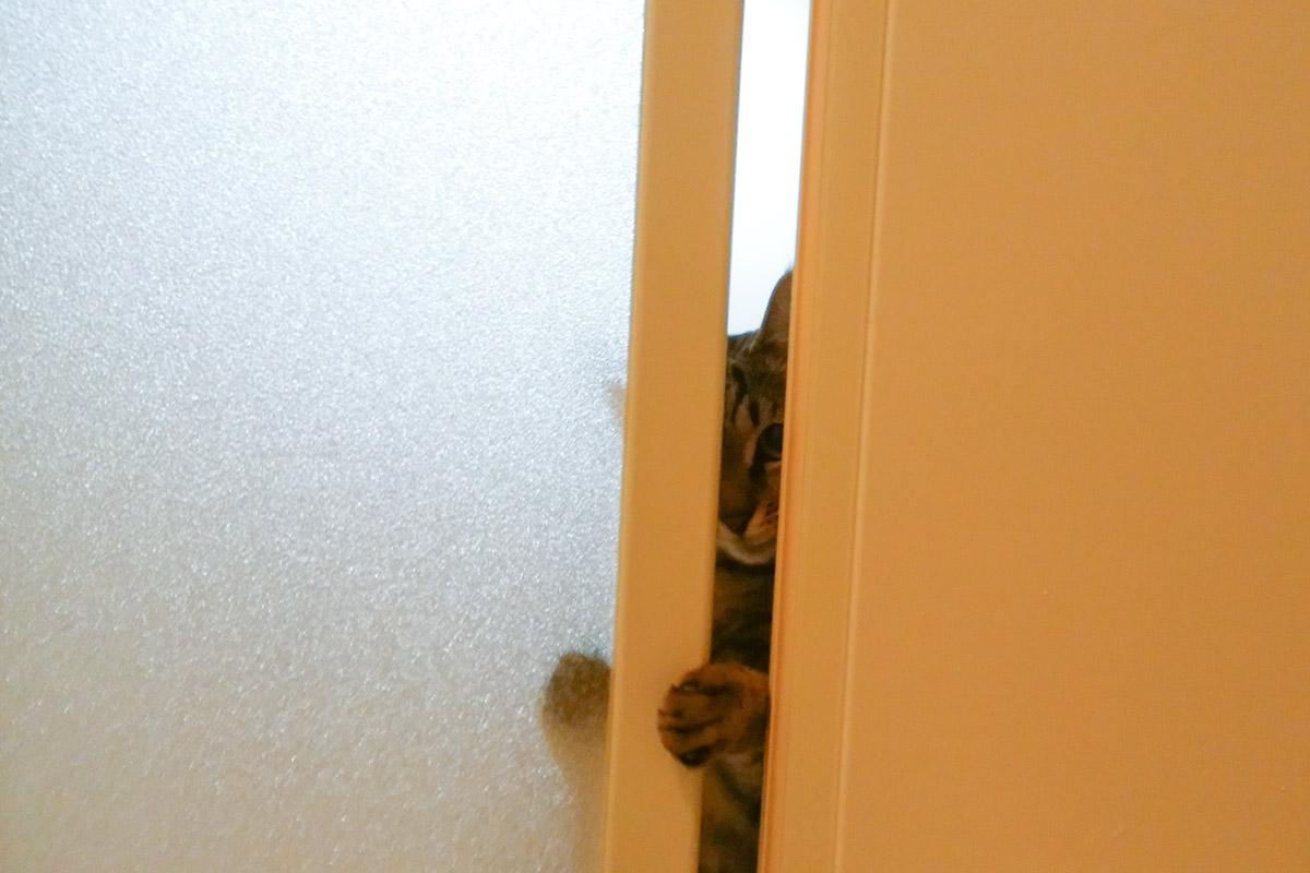 お風呂の隙間から覗く虎ノ介