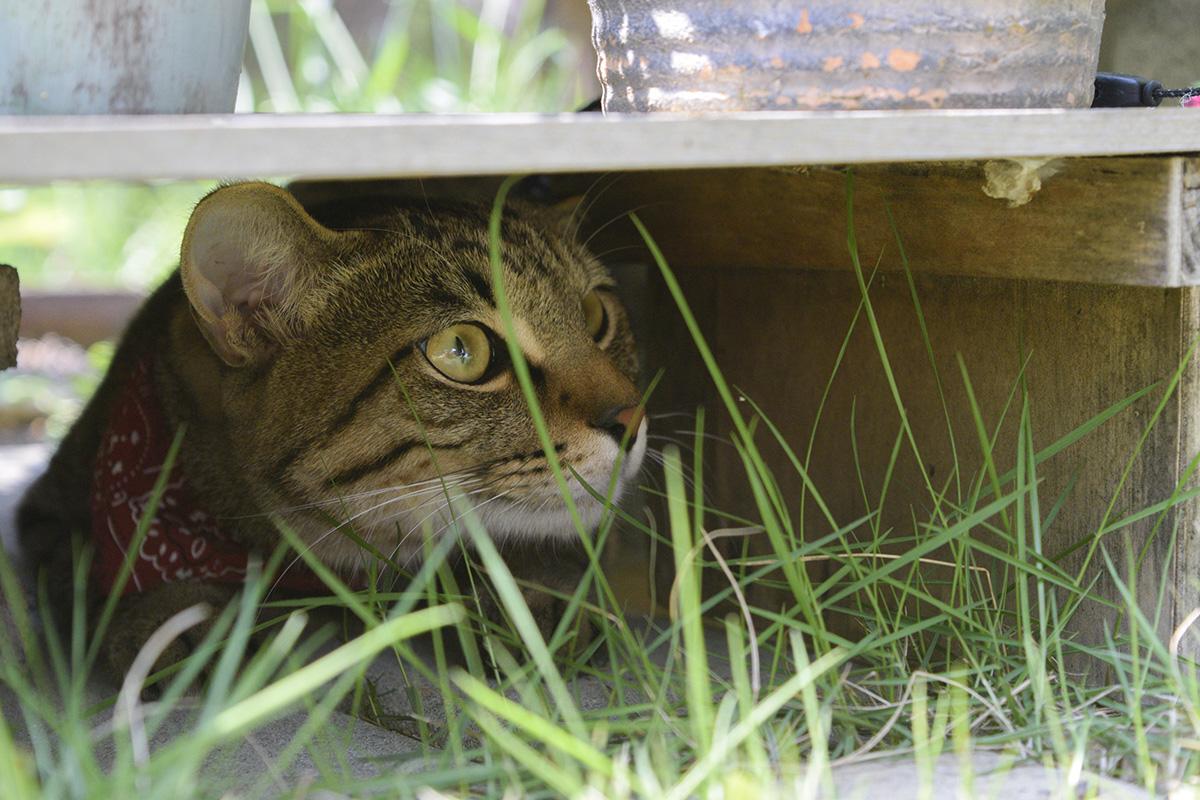 花台の下で色々楽しむ虎ノ介
