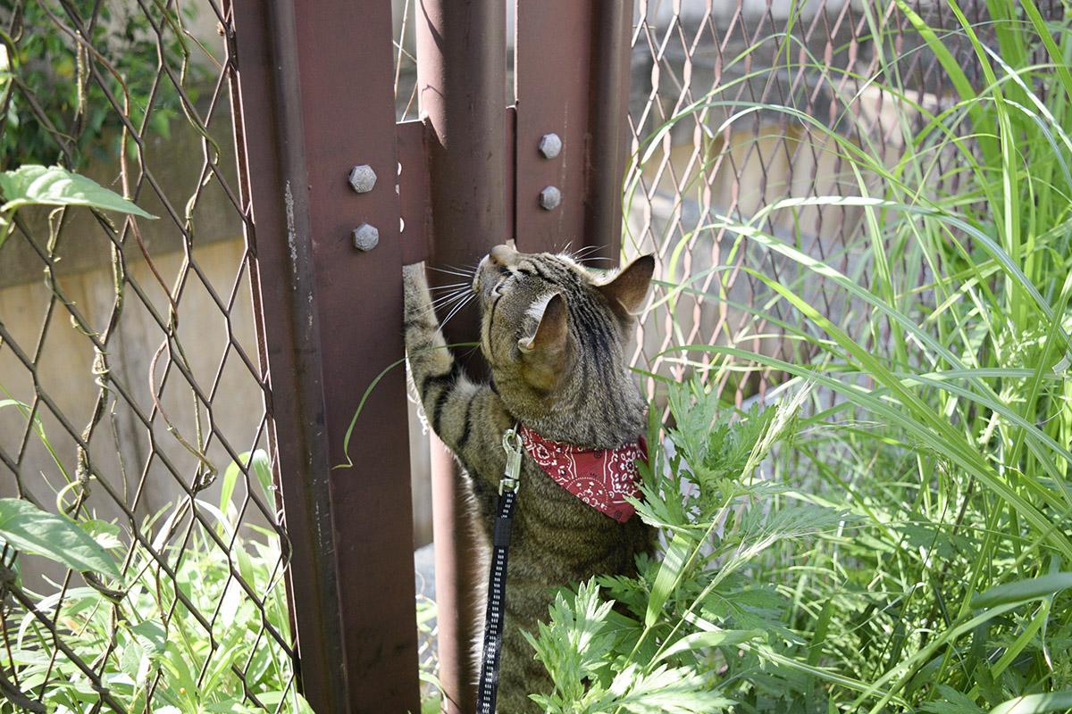フェンスの隙間から手を突っ込む虎ノ介