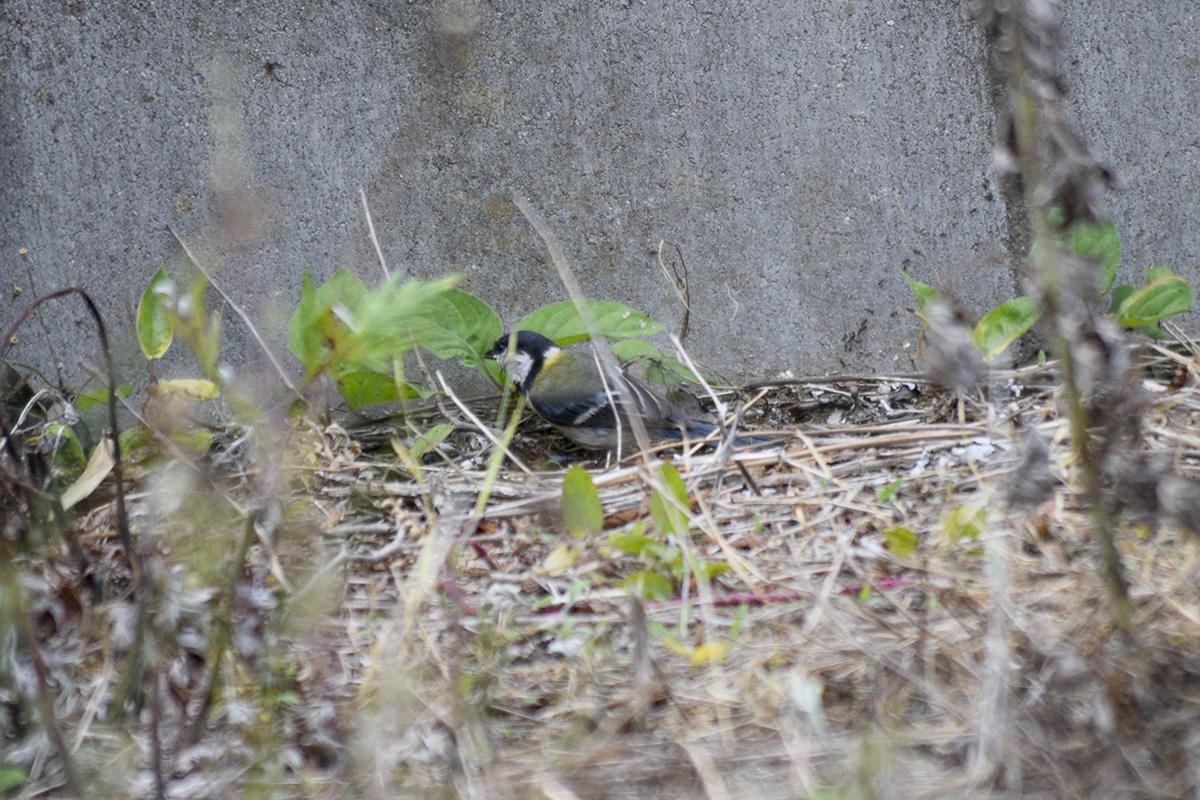 虎ノ介の側にいる鳥