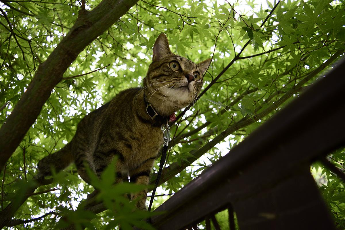 木からフェンスに移動する虎ノ介
