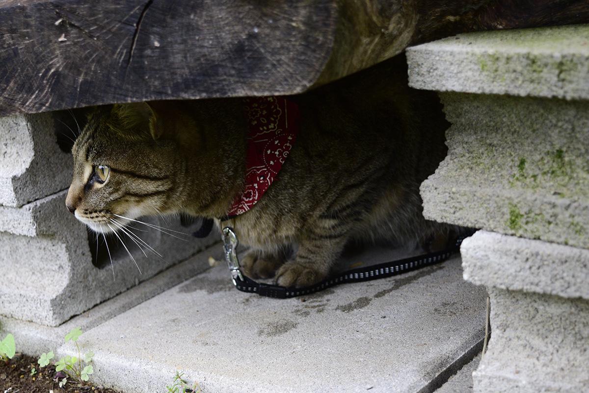 雨の中特等席から景色を眺めるキジトラ猫の虎ノ介