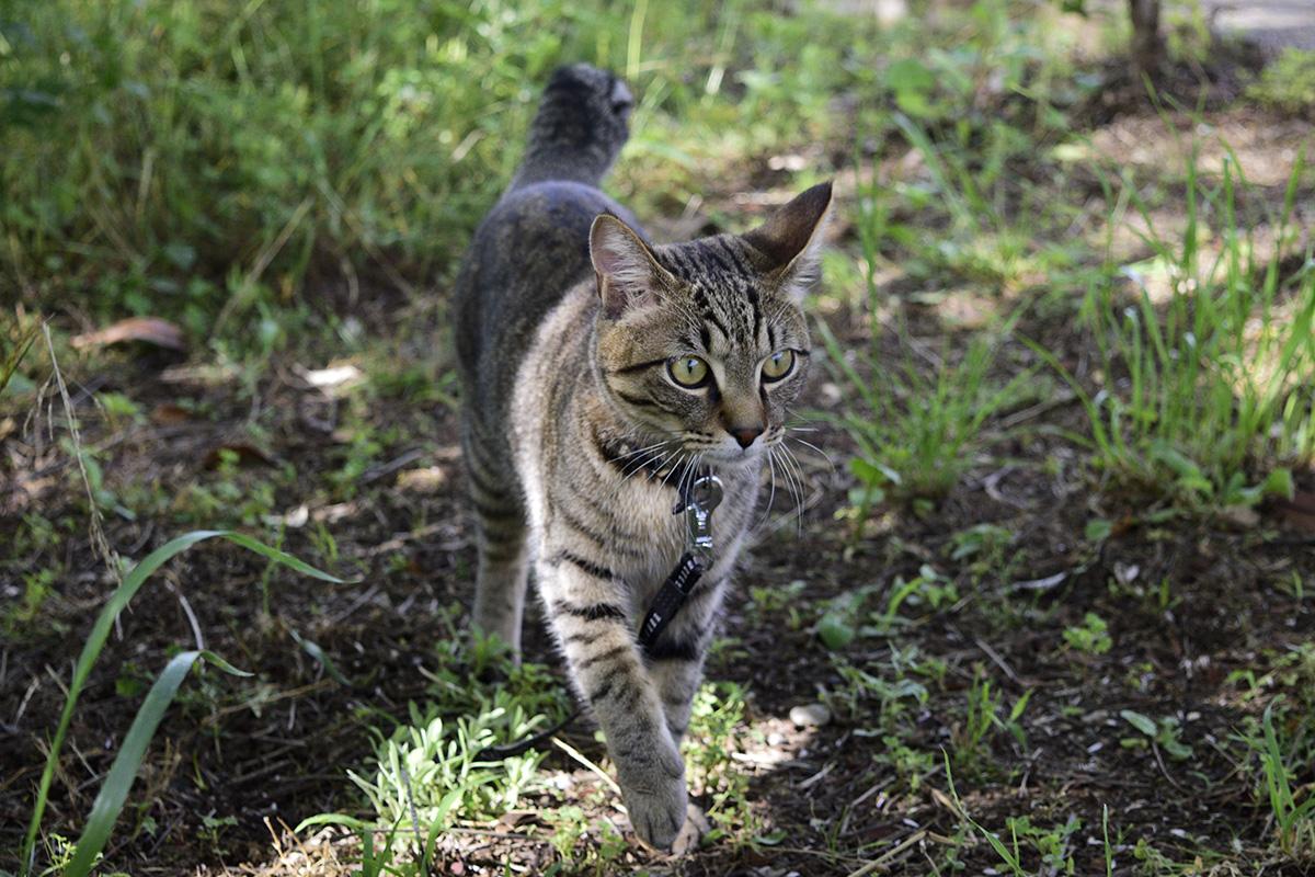 周囲を警戒しながら歩く猫