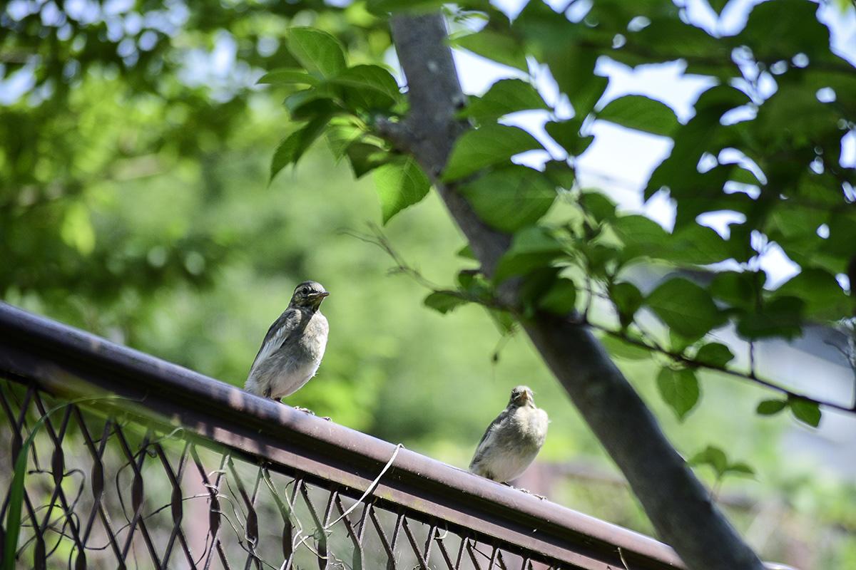 フェンスの上の2匹の鳥