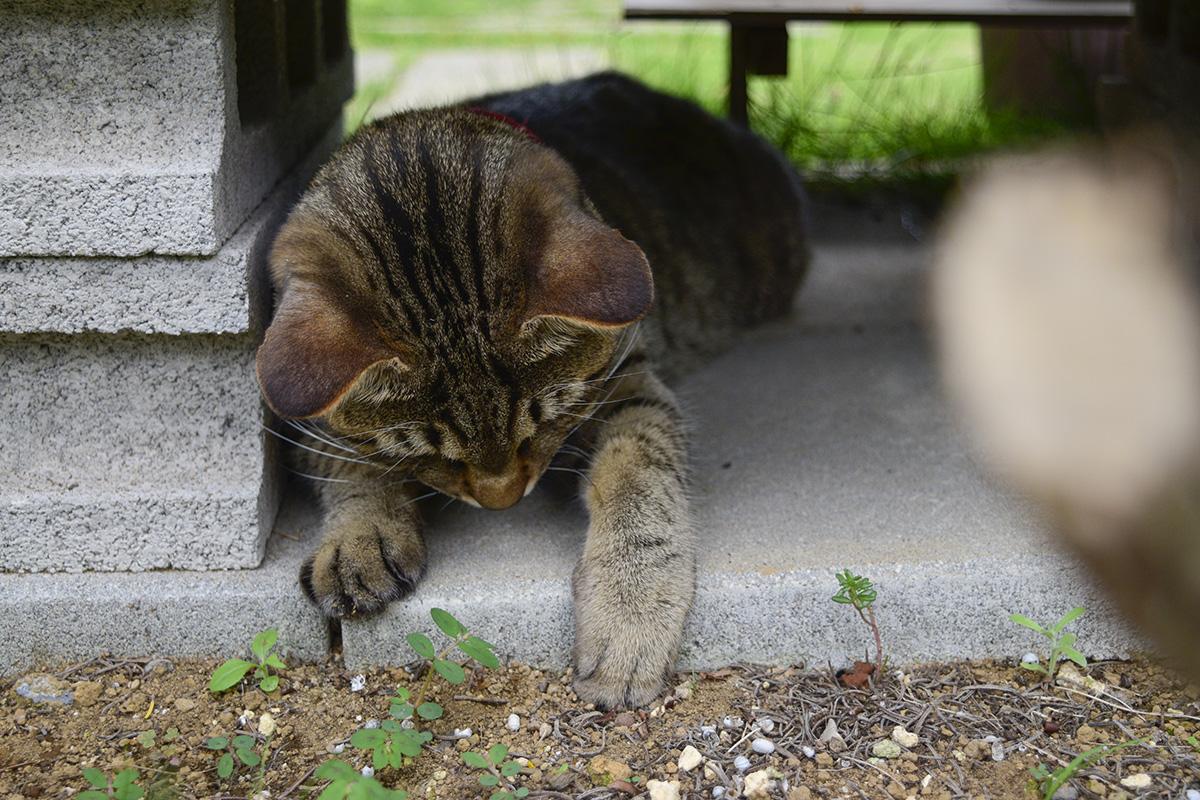 お庭に入ってくる虫を退治する虎ノ介