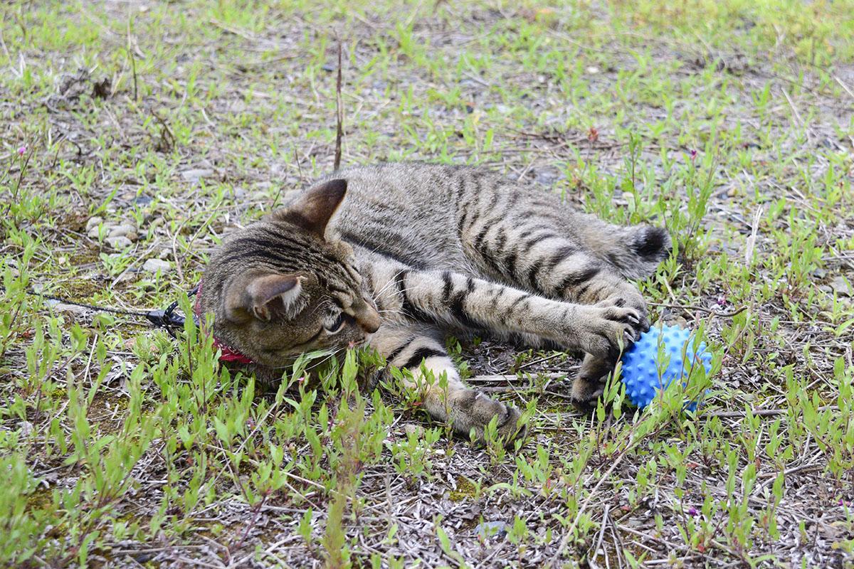 空き地でボールを見つけた虎ノ介