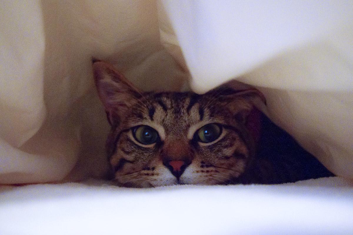布団の中で不貞腐れる虎ノ介