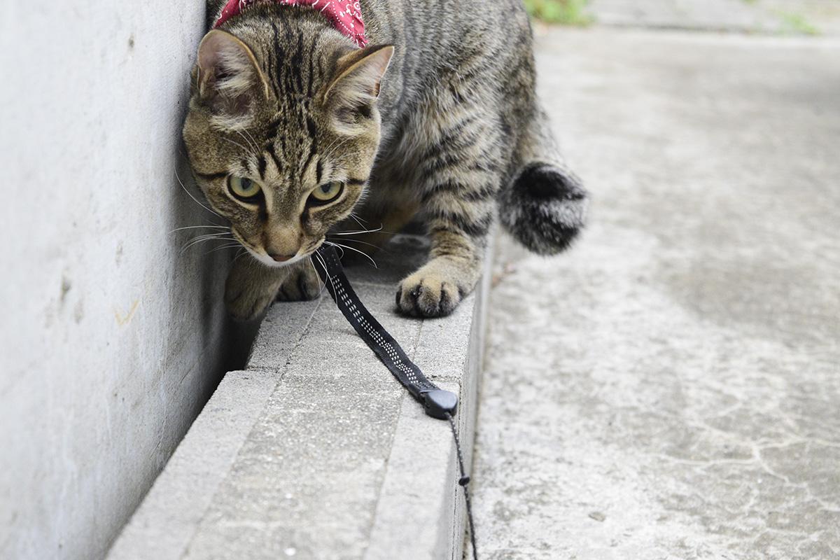 隙間に好奇心いっぱいのキジトラ猫の虎ノ介