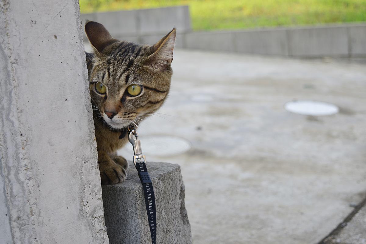 ブロック塀の陰から通行人をチェックする虎ノ介