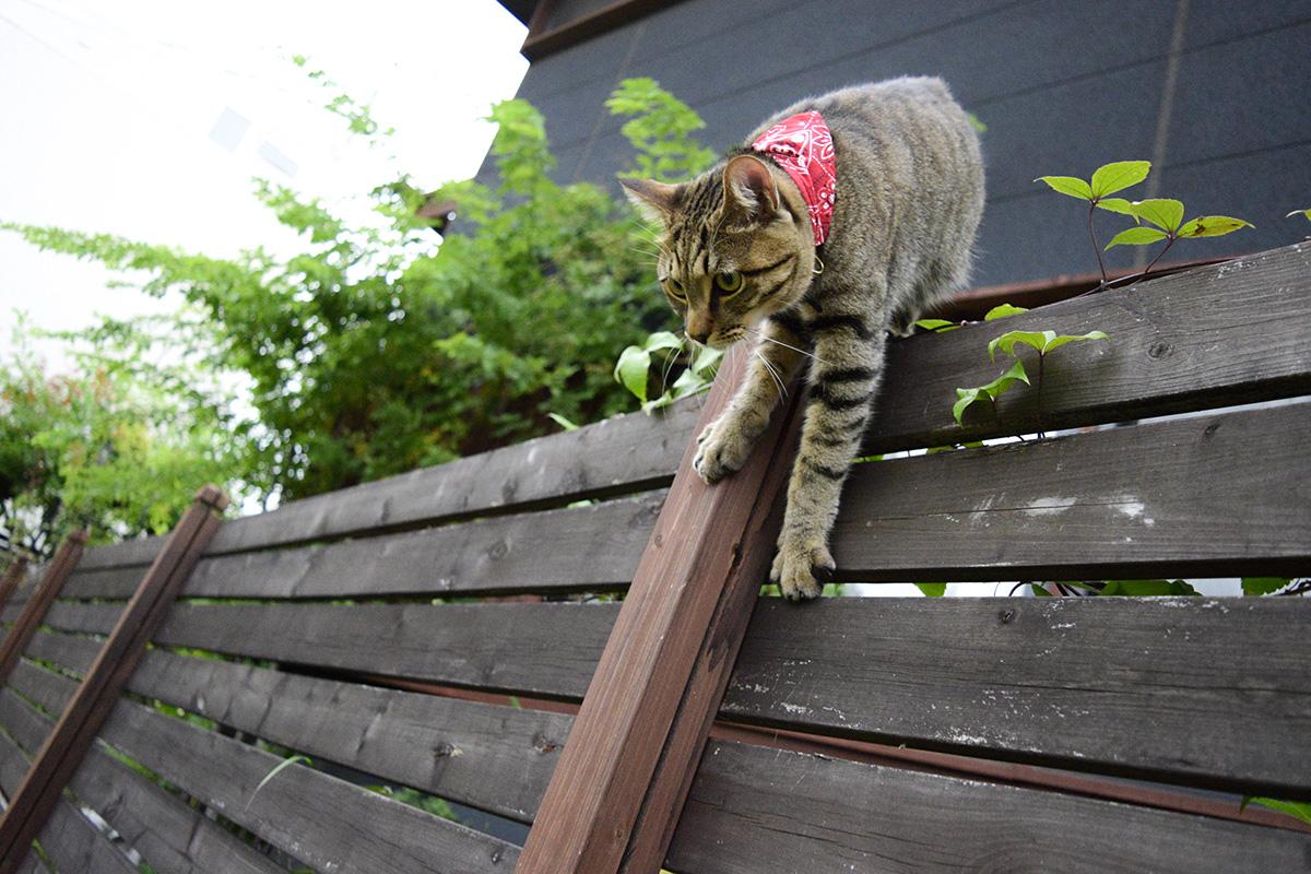 フェンスの上から虫を狙う虎ノ介