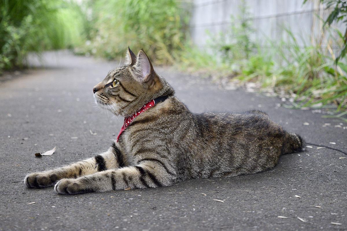 木の上を見つめるキジトラ猫の虎ノ介
